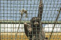 φυλακισμένος Στοκ εικόνα με δικαίωμα ελεύθερης χρήσης