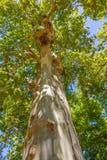 Φυλλώδες δέντρο στην προοπτική Στοκ Εικόνες