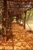Φυλλώδης σήραγγα Auroville Στοκ φωτογραφία με δικαίωμα ελεύθερης χρήσης