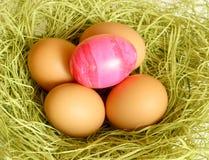 φωλιά αυγών Πάσχας Στοκ φωτογραφίες με δικαίωμα ελεύθερης χρήσης