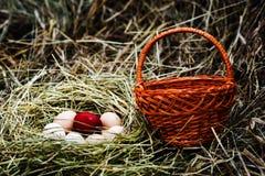 φωλιά αυγών Στοκ Φωτογραφίες