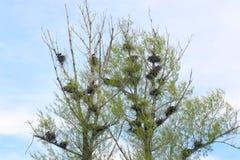 Φωλιά κοράκων Στοκ φωτογραφίες με δικαίωμα ελεύθερης χρήσης