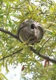 Φωλιά μελισσών στοκ φωτογραφία με δικαίωμα ελεύθερης χρήσης