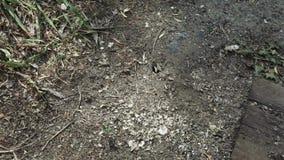 Φωλιά μυρμηγκιών στο έδαφος φιλμ μικρού μήκους