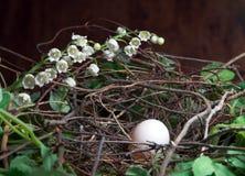 φωλιά Πάσχας Στοκ Φωτογραφία