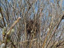 Φωλιά πουλιού στο θάμνο στοκ εικόνα με δικαίωμα ελεύθερης χρήσης