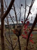 Φωλιά πουλιών στον κλάδο δέντρων στοκ εικόνες με δικαίωμα ελεύθερης χρήσης