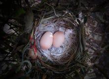 Φωλιά πουλιών