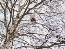 Φωλιά σε ένα δέντρο σε ένα πάρκο πόλεων Στοκ εικόνες με δικαίωμα ελεύθερης χρήσης