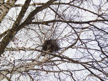 Φωλιά σε ένα δέντρο σε ένα πάρκο πόλεων Στοκ φωτογραφίες με δικαίωμα ελεύθερης χρήσης