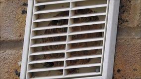Φωλιά σφηκών μέσα στον εξαεριστήρα απόθεμα βίντεο