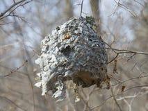 Φωλιά Hornet το φθινόπωρο Στοκ εικόνα με δικαίωμα ελεύθερης χρήσης