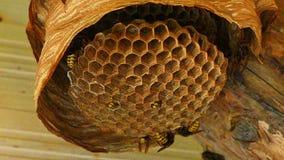 Φωλιά Hornet ` s φιλμ μικρού μήκους