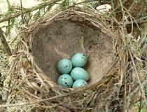 φωλιά s πουλιών Στοκ Φωτογραφία