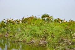 Φωλιές πουλιών υφαντών και πουλιά στον πάπυρο στοκ εικόνες