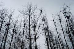 Φωλιές στα δέντρα στοκ φωτογραφία με δικαίωμα ελεύθερης χρήσης