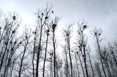 Φωλιές στα δέντρα στοκ εικόνα