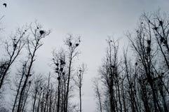 Φωλιές στα δέντρα στοκ εικόνες