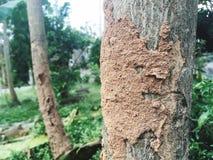 Φωλιές τερμιτών στοκ εικόνες