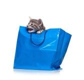 Φωνάζοντας γατάκι Στοκ εικόνα με δικαίωμα ελεύθερης χρήσης