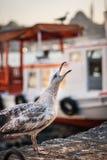 Φωνάζοντας seagull Στοκ εικόνα με δικαίωμα ελεύθερης χρήσης