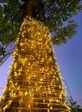 Φως διακοσμήσεων στο δέντρο Στοκ εικόνες με δικαίωμα ελεύθερης χρήσης