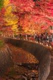 Φως επάνω στη σήραγγα Momiji διαδρόμων σφενδάμνου στην εποχή φθινοπώρου σε Kawa Στοκ Εικόνες
