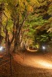 Φως επάνω στη σήραγγα Momiji διαδρόμων σφενδάμνου στην εποχή φθινοπώρου σε Kawa Στοκ φωτογραφία με δικαίωμα ελεύθερης χρήσης