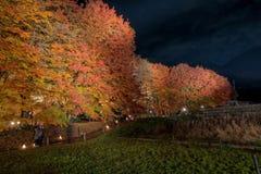 Φως διαδρόμων σφενδάμνου Kawaguchiko επάνω στο φεστιβάλ Στοκ εικόνες με δικαίωμα ελεύθερης χρήσης