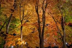 Φως διαδρόμων σφενδάμνου Kawaguchiko επάνω στο φεστιβάλ Στοκ φωτογραφίες με δικαίωμα ελεύθερης χρήσης