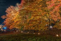 Φως διαδρόμων σφενδάμνου Kawaguchiko επάνω στο φεστιβάλ Στοκ Εικόνες