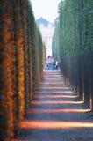 Φως και διάδρομος Thuya στις πηγές Στοκ Φωτογραφία