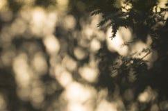 Φως και σκιές των δέντρων που προβάλλονται επάνω στον τοίχο Στοκ εικόνες με δικαίωμα ελεύθερης χρήσης