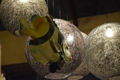 Φως και ψάρια Στοκ φωτογραφία με δικαίωμα ελεύθερης χρήσης
