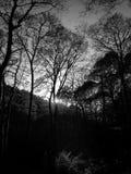 Φως μέσω της δασώδους περιοχής Στοκ φωτογραφίες με δικαίωμα ελεύθερης χρήσης