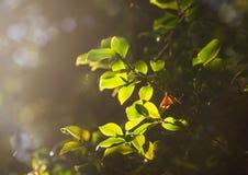 Φως μέσω του δάσους Στοκ Εικόνα