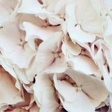 φως λουλουδιών ανασκόπησης playnig Στοκ εικόνες με δικαίωμα ελεύθερης χρήσης