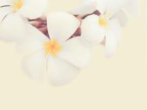 φως λουλουδιών ανασκόπησης playnig Στοκ Φωτογραφίες