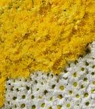 φως λουλουδιών ανασκόπησης playnig Στοκ φωτογραφία με δικαίωμα ελεύθερης χρήσης