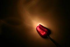 φως που χρωματίζεται Στοκ εικόνες με δικαίωμα ελεύθερης χρήσης