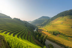 Φως πρωινού από το ρύζι στο πεζούλι στο τοπίο του Βιετνάμ Στοκ εικόνα με δικαίωμα ελεύθερης χρήσης