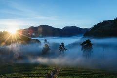 Φως πρωινού, τοπίο, φύση, άποψη πρωινού του ANG Khang, Chiangmai Doi Στοκ Φωτογραφία