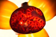 Φως ροδιών και persimmon από μέσα Στοκ φωτογραφία με δικαίωμα ελεύθερης χρήσης