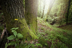 Φως σε ένα πράσινο δάσος με τα δέντρα το καλοκαίρι Στοκ Εικόνες