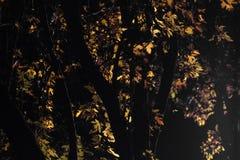 Φως στα φύλλα Στοκ εικόνες με δικαίωμα ελεύθερης χρήσης