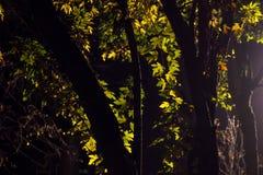 Φως στα φύλλα Στοκ Εικόνες