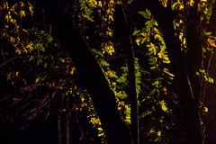 Φως στα φύλλα Στοκ φωτογραφία με δικαίωμα ελεύθερης χρήσης
