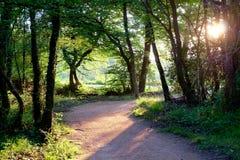 Φως στο δάσος στοκ εικόνα
