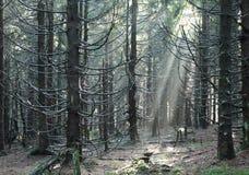 Φως στο ξύλο στοκ εικόνα με δικαίωμα ελεύθερης χρήσης