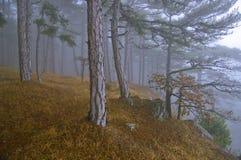 Φως της Misty Στοκ φωτογραφία με δικαίωμα ελεύθερης χρήσης
